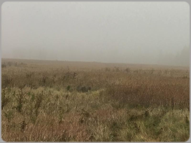 Anxiety Can Feel Like Walking Through A Fog